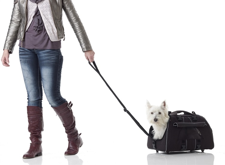 Pet Airline Carrier