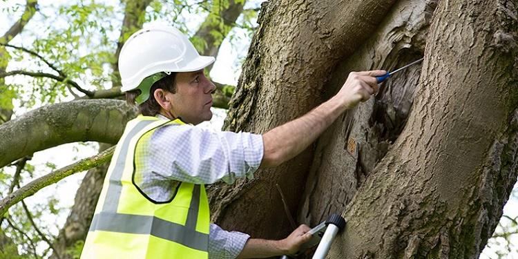 arboriculture-consultant