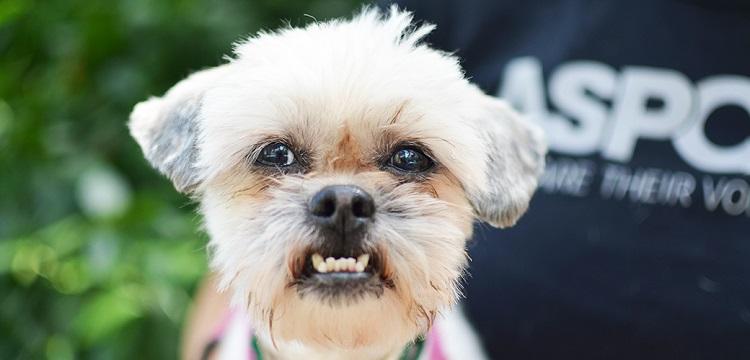 dog aggressive barking