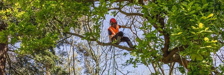 tree surgeon arborist