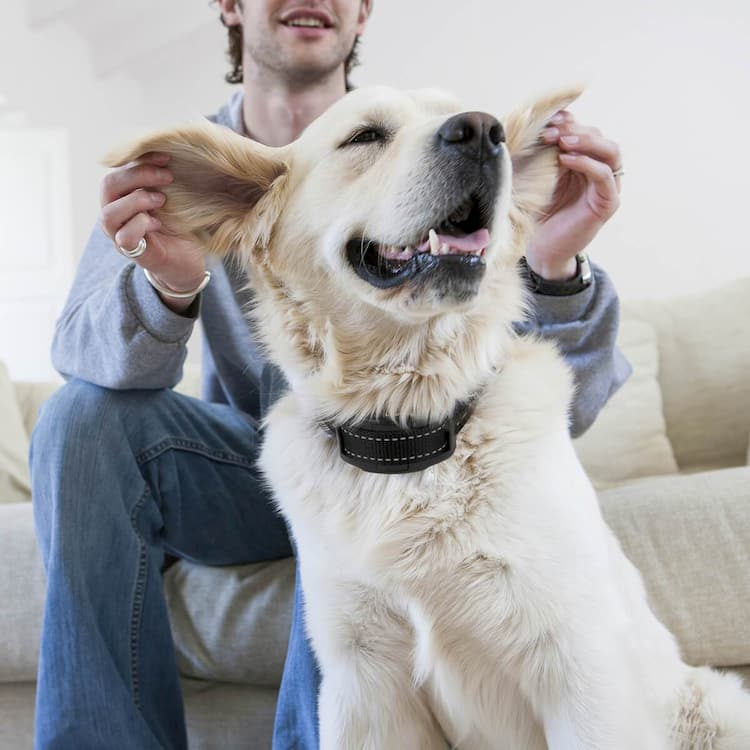 dog collars to stop dogs barking