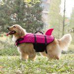 dog wearing pink life jacket